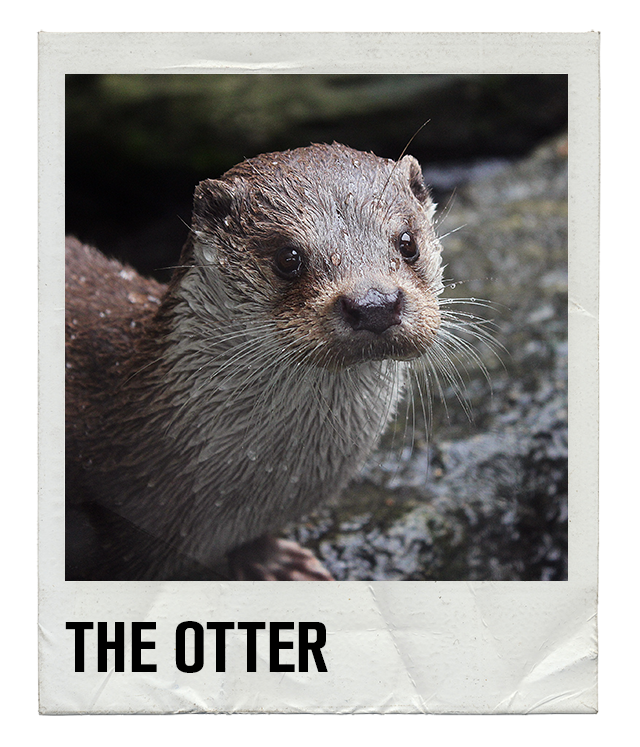 what does otter mean in gay terms